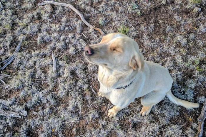 CDT-New-Mexico-Stubing-Doggo
