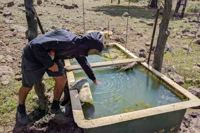CDT-New-Mexico-Water-Source-Appa-Stubing-Cow-Pond
