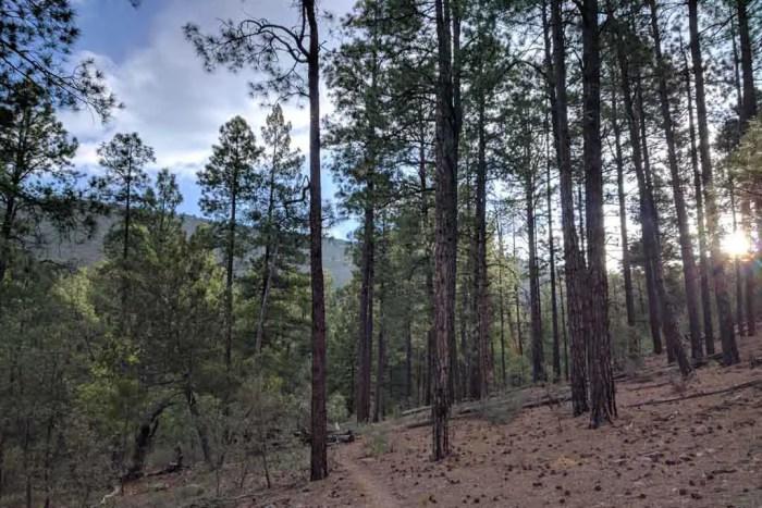 CDT-New-Mexico-Week-2-Trail