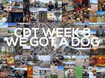 Continental Divide Trail Week 3: We Got A Dog