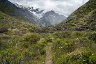 New-Zealand-Cascade-Saddle-Route-Dart-Valley-Plants