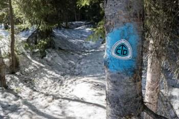 CDT-New-Mexico-Snow-CDT-Marker-Tree