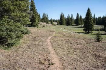 CDT-New-Mexico-Trail-Sunny