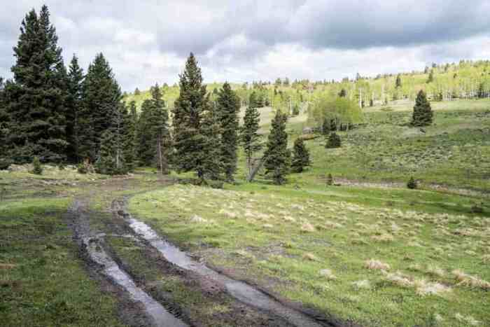 CDT-New-Mexico-Muddy-Road-Trail