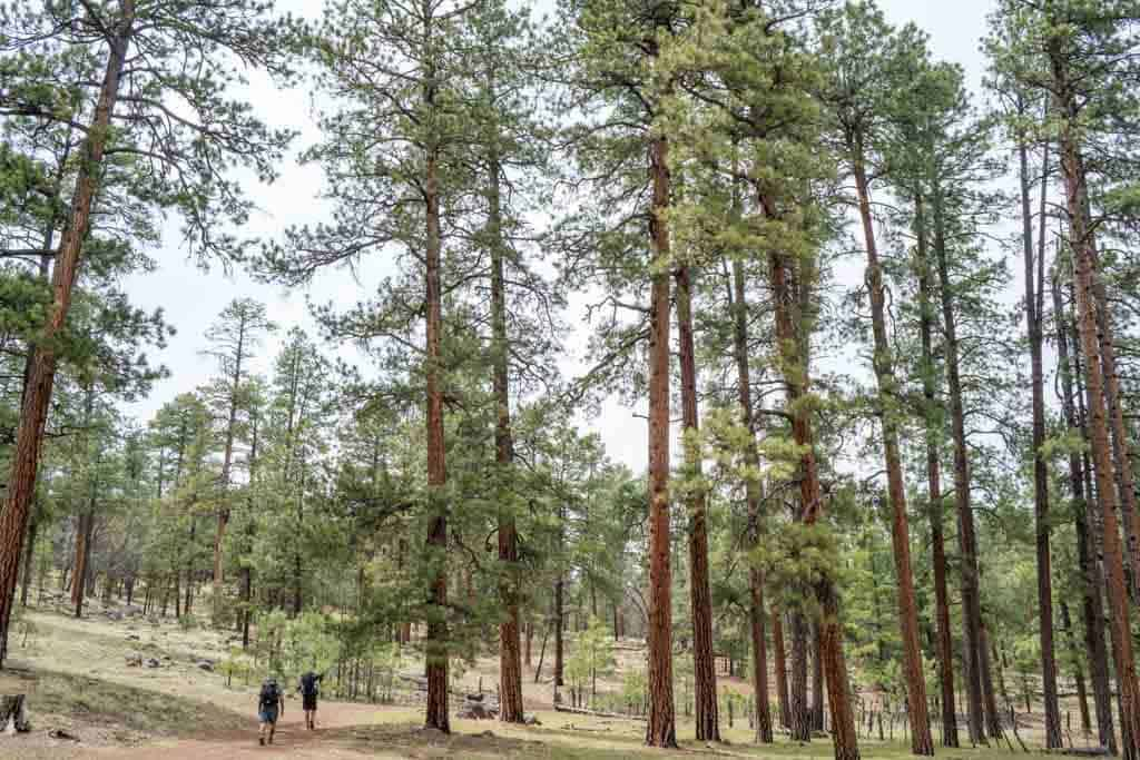 CDT-New-Mexico-Gallery-Appa-Moist-Trees