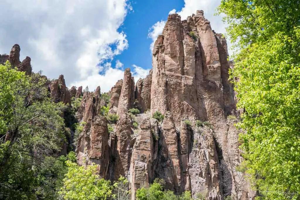 CDT-New-Mexico-Gila-Little-Bear