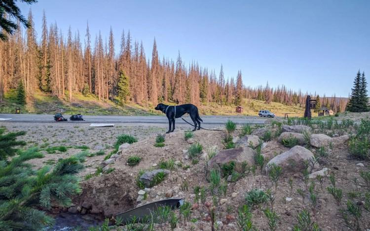 CDT Spring Creek Pass Dog