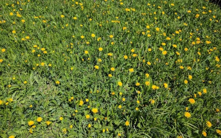CDT Colorado Flowers