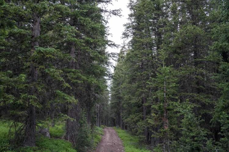 CDT Colorado Forest Road Bike Path