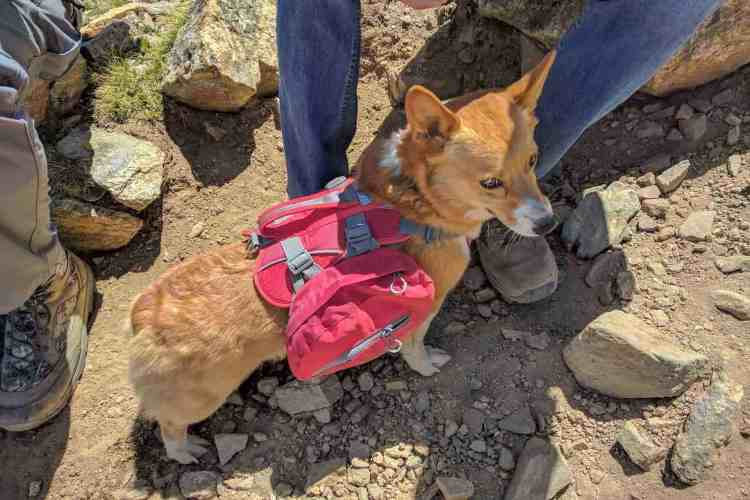 CDT Colorado Mount Elbert Corgi