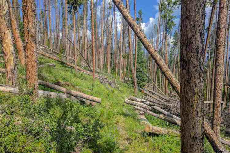 CDT Colorado Blowdowns