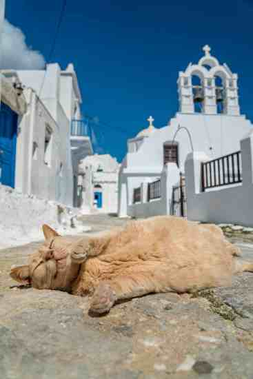Greece Cat Eyes Closed
