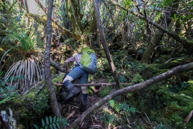Tasmania Federation Peak Track Moss Ridge