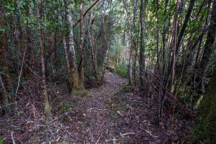 Tasmania Federation Peak Track Good Trail