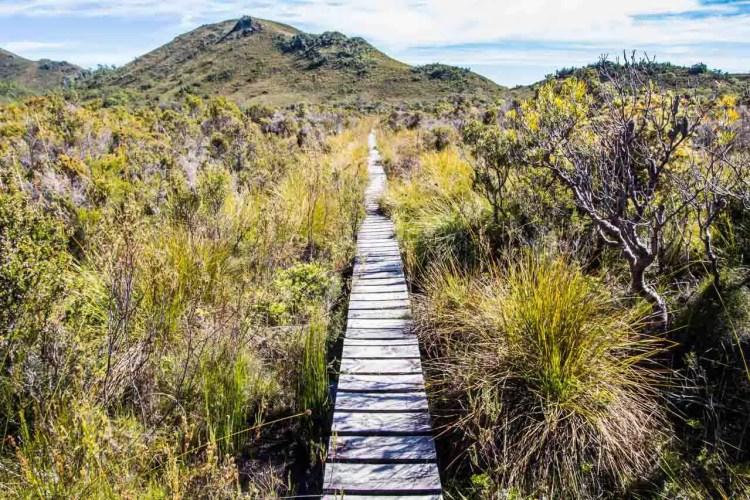 Tasmania Mount Anne Circuit Boardwalk