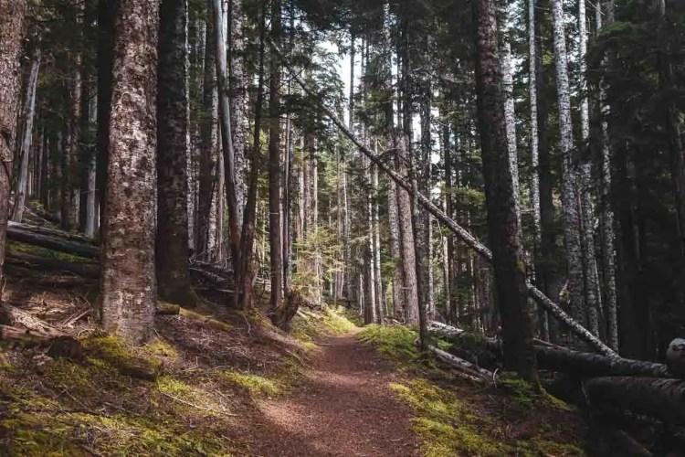 Washington Wonderland Trail Trees