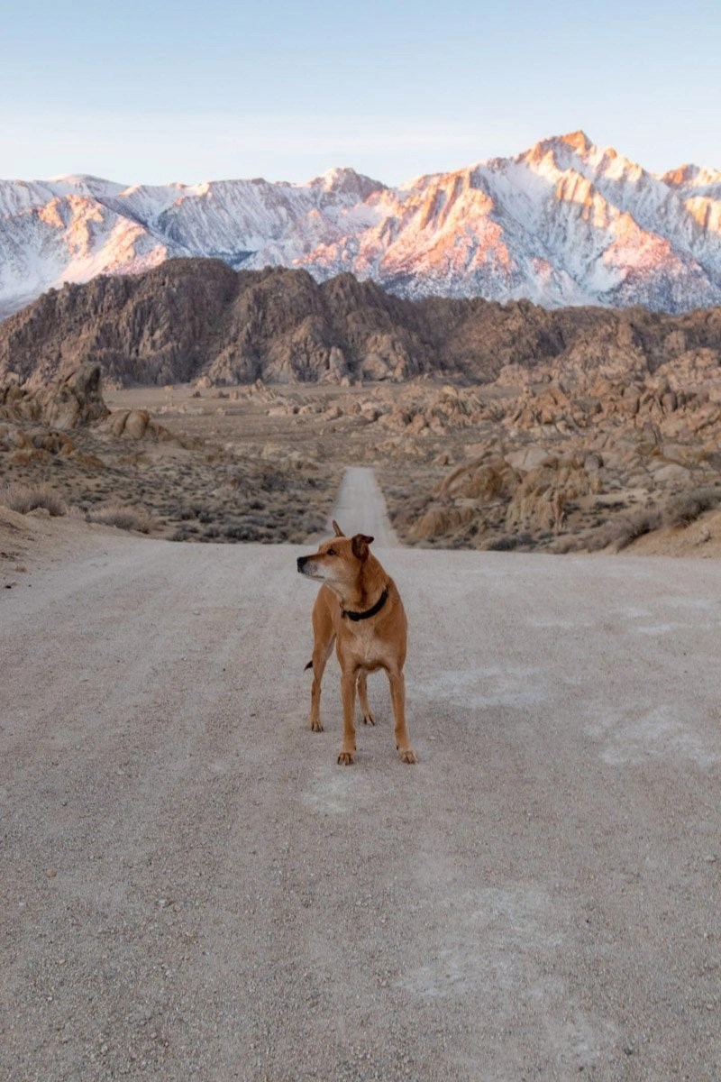 dog in alabama hills