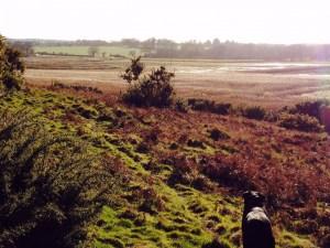 Suffolk dog walks