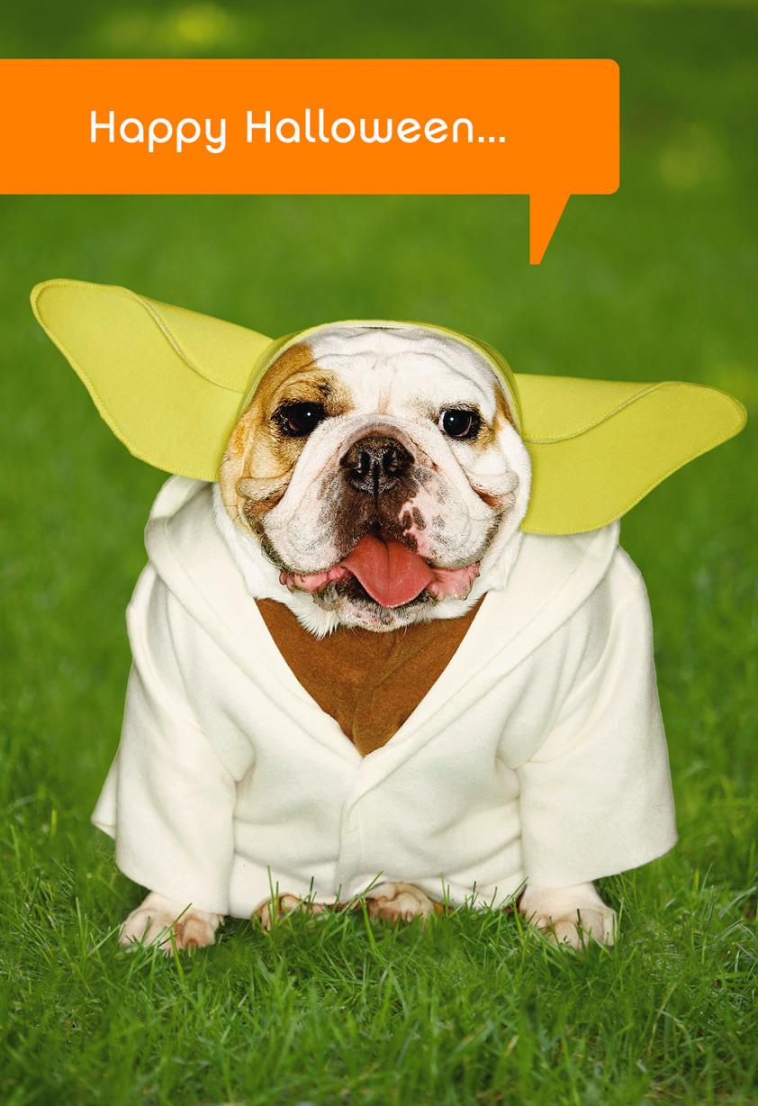 Star Wars Yoda Dog Halloween Card Greeting Cards
