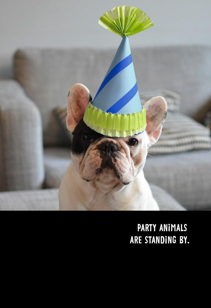 Party Animals Funny Birthday Card Greeting Cards Hallmark