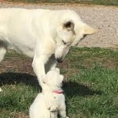 Maci loves puppies!