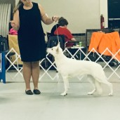 12/2018 Mason-Dixie Show-Best of Breed