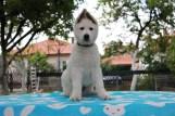 6/7 week old picture from his wonderful breedee