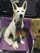BIS puppy!!