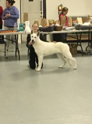 Winchester KY UKC show. 8months