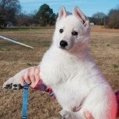 Blue Male aka Ghost RESERVED