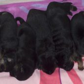 All 9 fat little pigs!