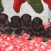All 5 Females