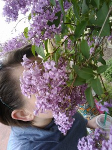 The-scent-of-lilacs-Happy-Mothers-Day