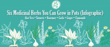 6-medicinal-herbs-you-can-grow-in-pots