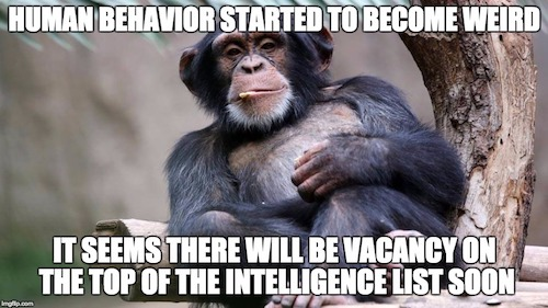 Funny Friday - Chimp