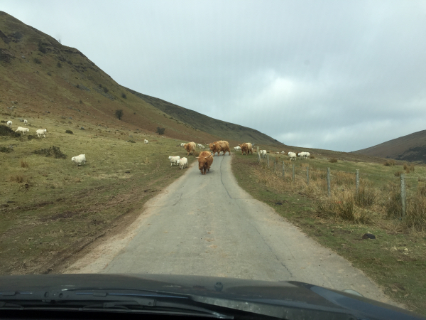 Unexpected hazard on road