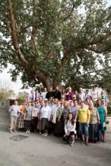 Под деревом Закхея