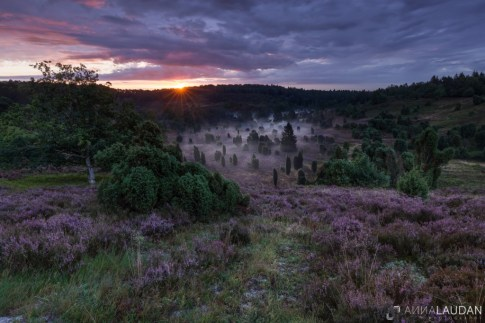 Sunrise-at-the-heath(1)