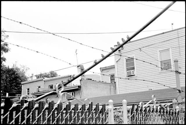 2017-birds_on_power_line_barbed_wire_malcolmx_bedstuy_brooklyn
