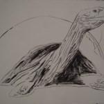 Vanishing Animals - Galapagos Tortoise, 1986