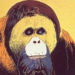 Orangutan, [II.299], 1983