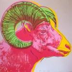Bighorn Ram, [IIB.302], 1983