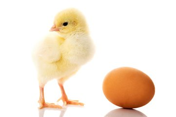 It's like a chicken and egg situation... You know... which would you eat first?