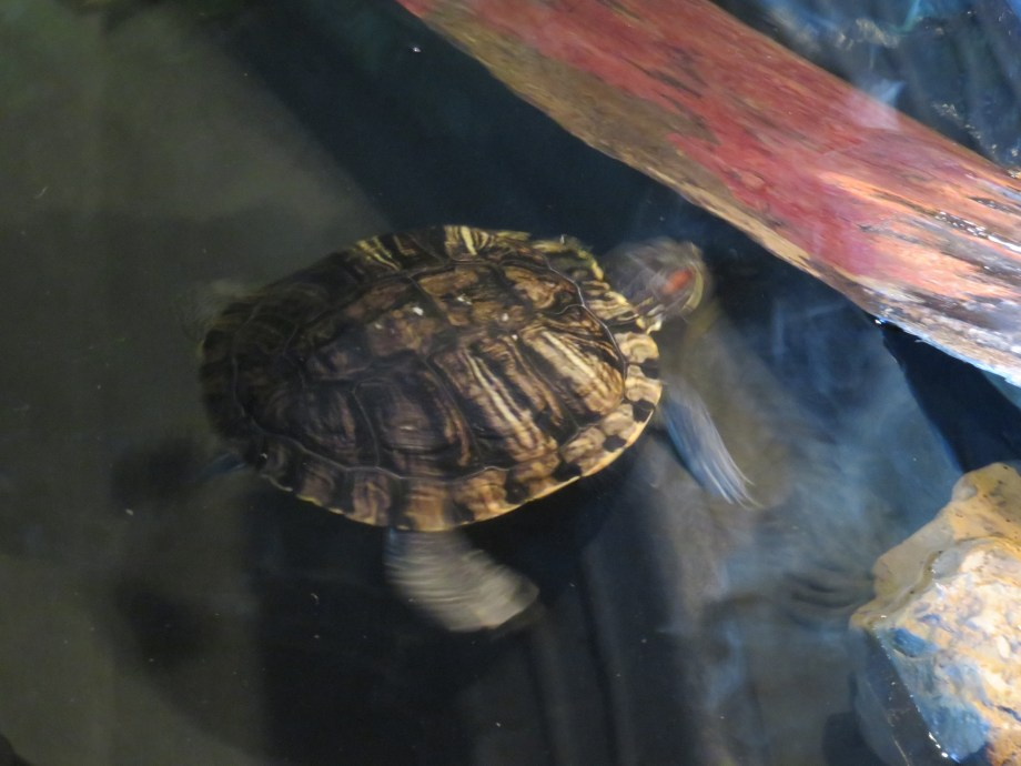 Turtle in action
