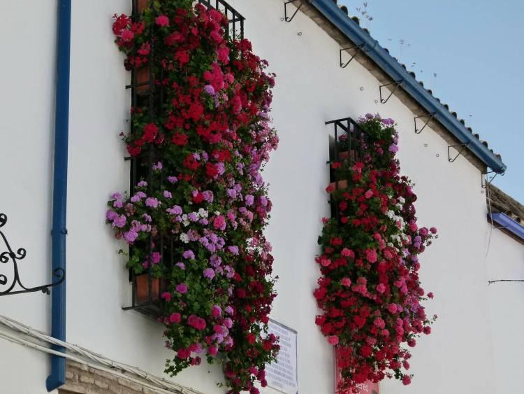 Córdoba y el despertar de la primavera