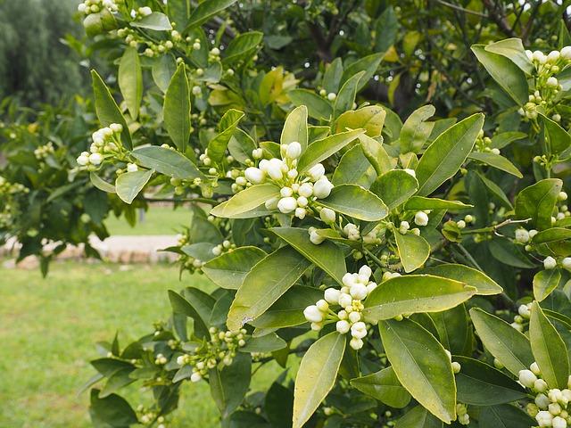 Ya es primavera, ya huele a azahar: Ya ha florecido Al Ándalus