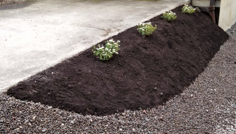 Slope with candytuft flowers and new black mulch