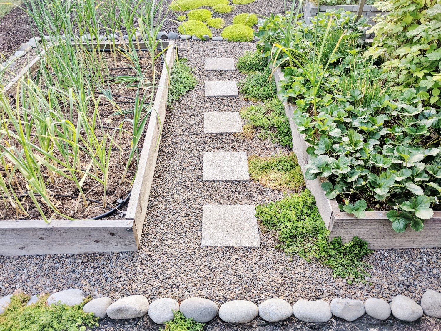 Raised bed garden landscaped with pea gravel and paver stones