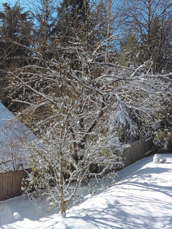 Home and Garden Winterization Checklist