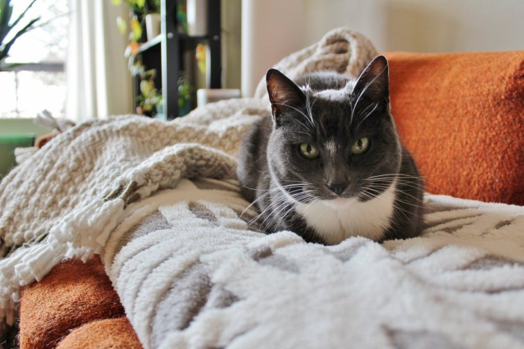 Cozy and modern throw blankets that are cat-approved